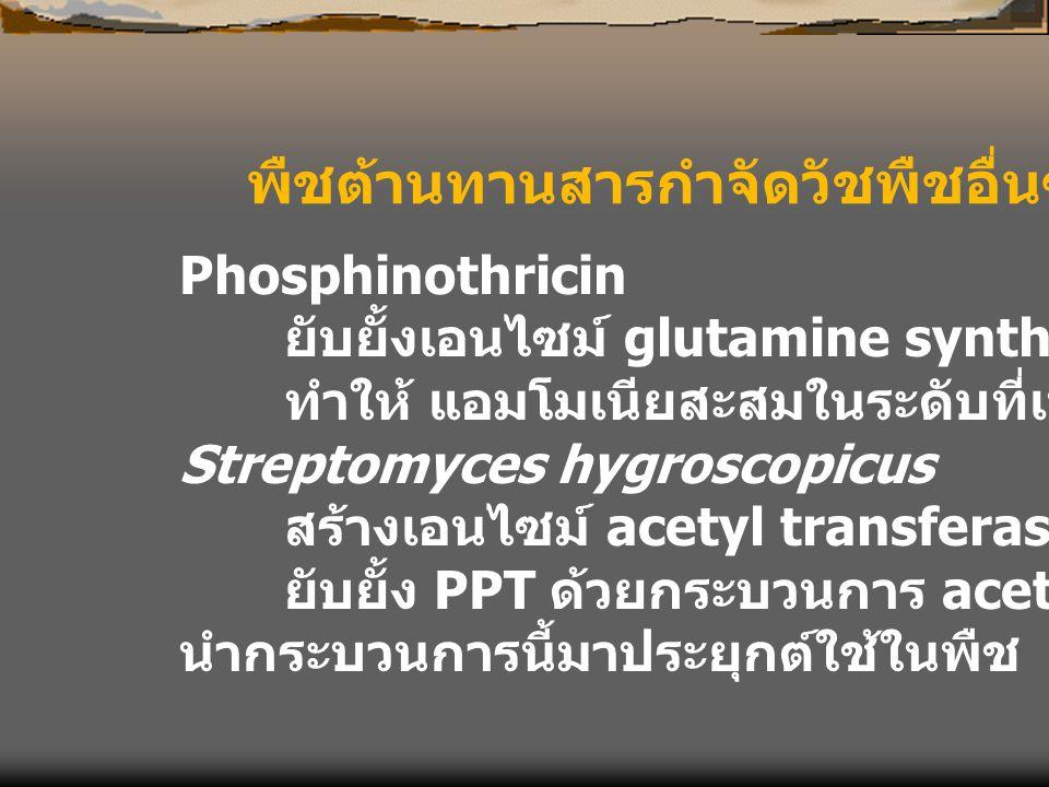 พืชต้านทานสารกำจัดวัชพืชอื่นๆ Phosphinothricin ยับยั้งเอนไซม์ glutamine synthetase ทำให้ แอมโมเนียสะสมในระดับที่เป็นพิษ Streptomyces hygroscopicus สร้