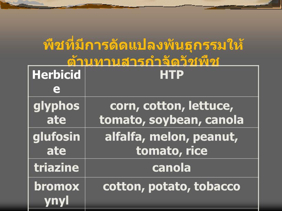 พืชที่มีการดัดแปลงพันธุกรรมให้ ต้านทานสารกำจัดวัชพืช Herbicid e HTP glyphos ate corn, cotton, lettuce, tomato, soybean, canola glufosin ate alfalfa, m