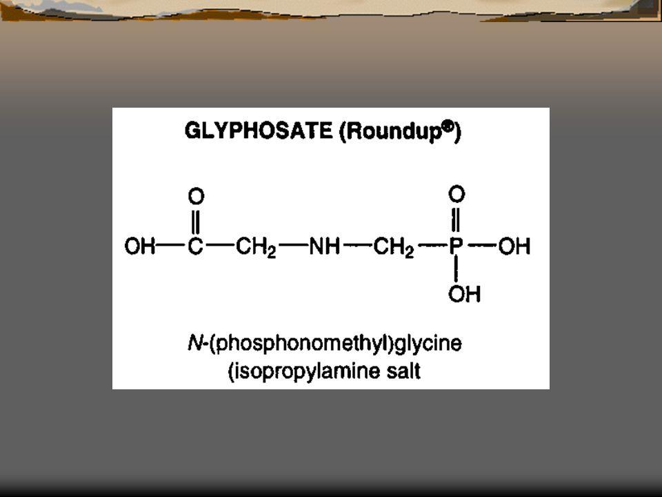 EPSPS enzyme Shikimate pathway เกี่ยวข้องกับการสังเคราะห์กรดอะมิโนกลุ่มอะโรมาติก Phe, Tyr และ Tryp ( องค์ประกอบของโปรตีน ลิกนิน และอื่นๆ มีความสำคัญต่อการเจริญเติบโตและทำหน้าที่ของพืช เอนไซม์ถูกยับยั้ง สร้างกรดอะมิโนไม่ได้ พืชตาย