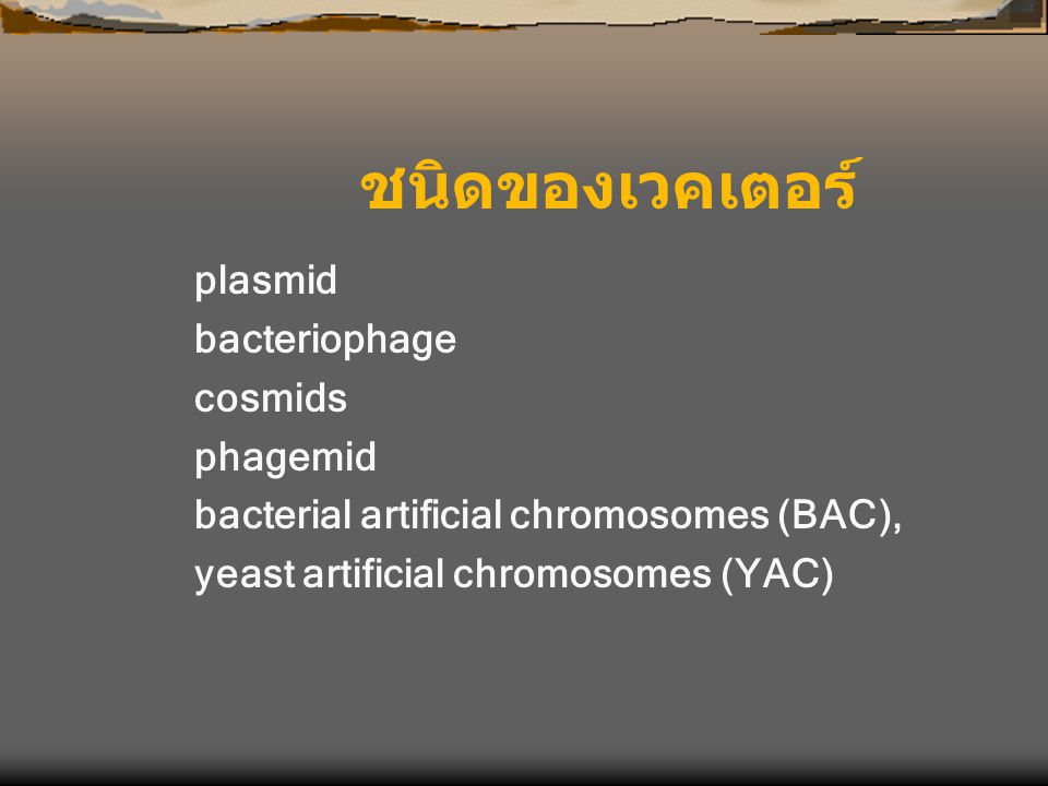 plasmid bacteriophage cosmids phagemid bacterial artificial chromosomes (BAC), yeast artificial chromosomes (YAC) ชนิดของเวคเตอร์