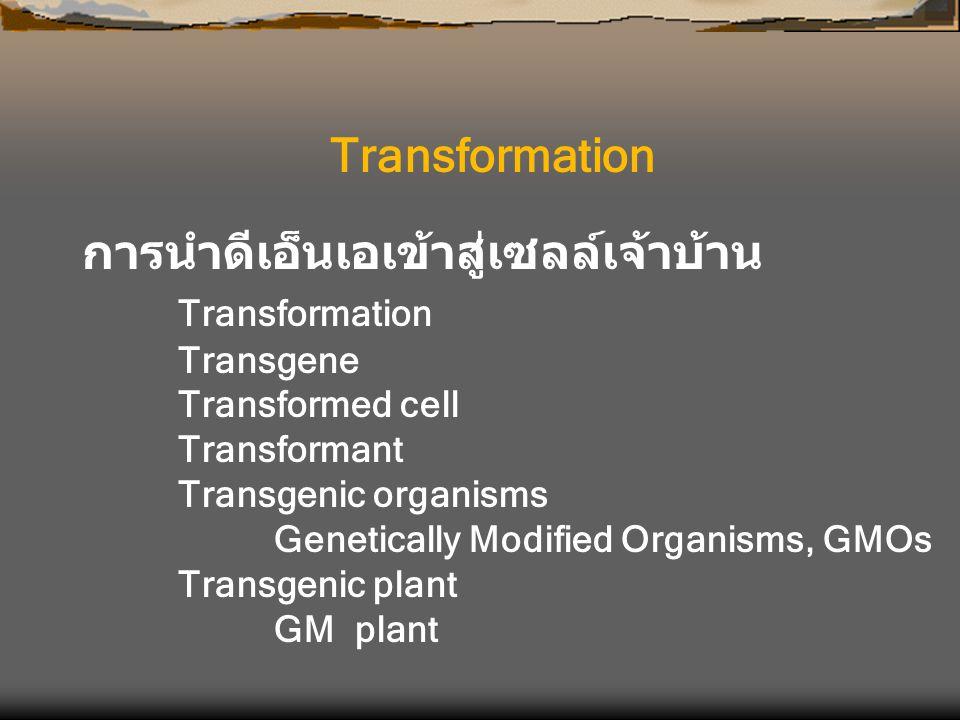 Transformation การนำดีเอ็นเอเข้าสู่เซลล์เจ้าบ้าน Transformation Transgene Transformed cell Transformant Transgenic organisms Genetically Modified Orga