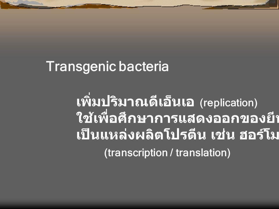 Transgenic bacteria เพิ่มปริมาณดีเอ็นเอ (replication) ใช้เพื่อศึกษาการแสดงออกของยีน เป็นแหล่งผลิตโปรตีน เช่น ฮอร์โมน หรือ ยา (transcription / translat