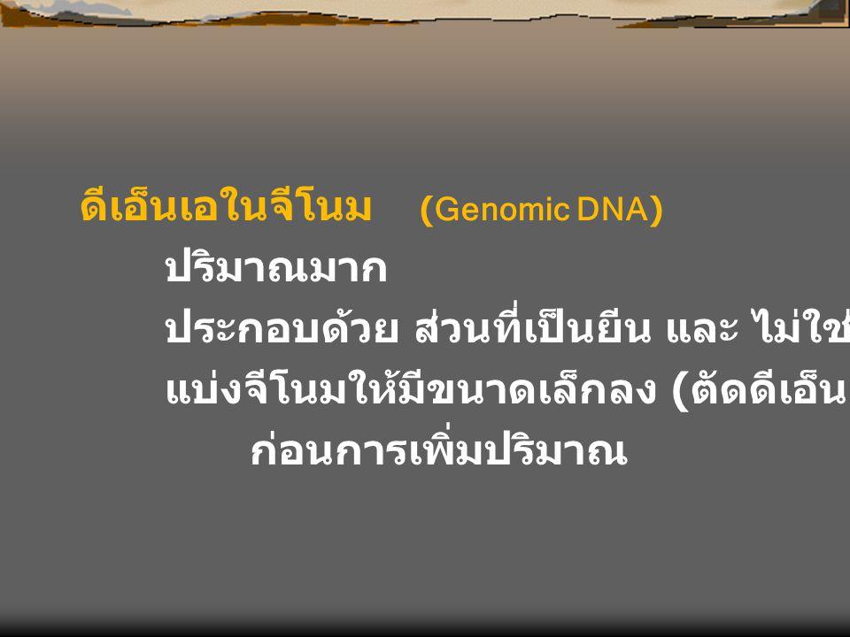 ดีเอ็นเอในจีโนม (Genomic DNA) ปริมาณมาก ประกอบด้วย ส่วนที่เป็นยีน และ ไม่ใช่ยีน แบ่งจีโนมให้มีขนาดเล็กลง ( ตัดดีเอ็นเอให้สั้นลง ) ก่อนการเพิ่มปริมาณ