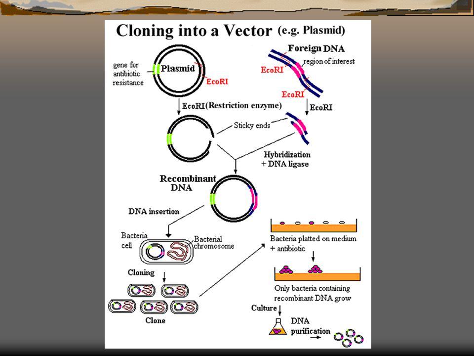 DNA vector ดีเอ็นเอที่มีคุณสมบัติจำเพาะ จาก แบคทีเรีย ไวรัส ยีสต์ หรือ สร้างขึ้น (artificial chromosome) นำดีเอ็นเอแปลกปลอมเข้าสู่เซลล์เจ้าบ้าน ( แบคทีเรีย หรือ ยีสต์ ) เพื่อการจำลองตัว เป็นการเพิ่มปริมาณดีเอ็นเอ