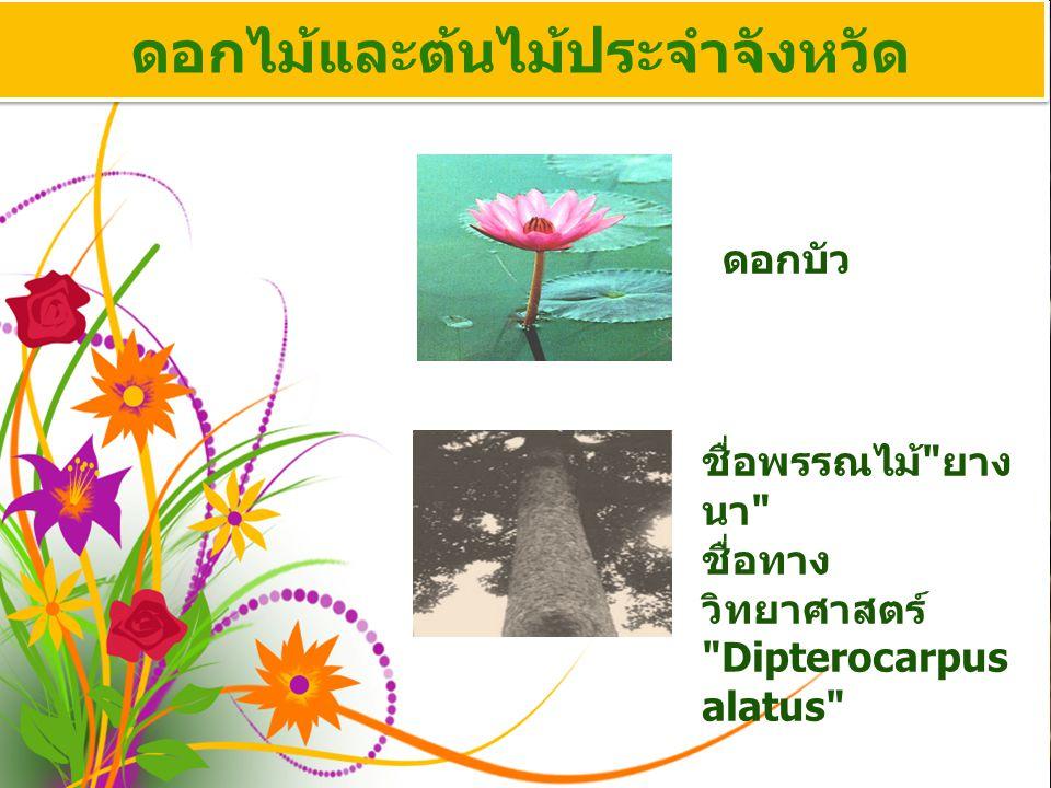 ดอกไม้และต้นไม้ประจำจังหวัด ดอกบัว ชื่อพรรณไม้