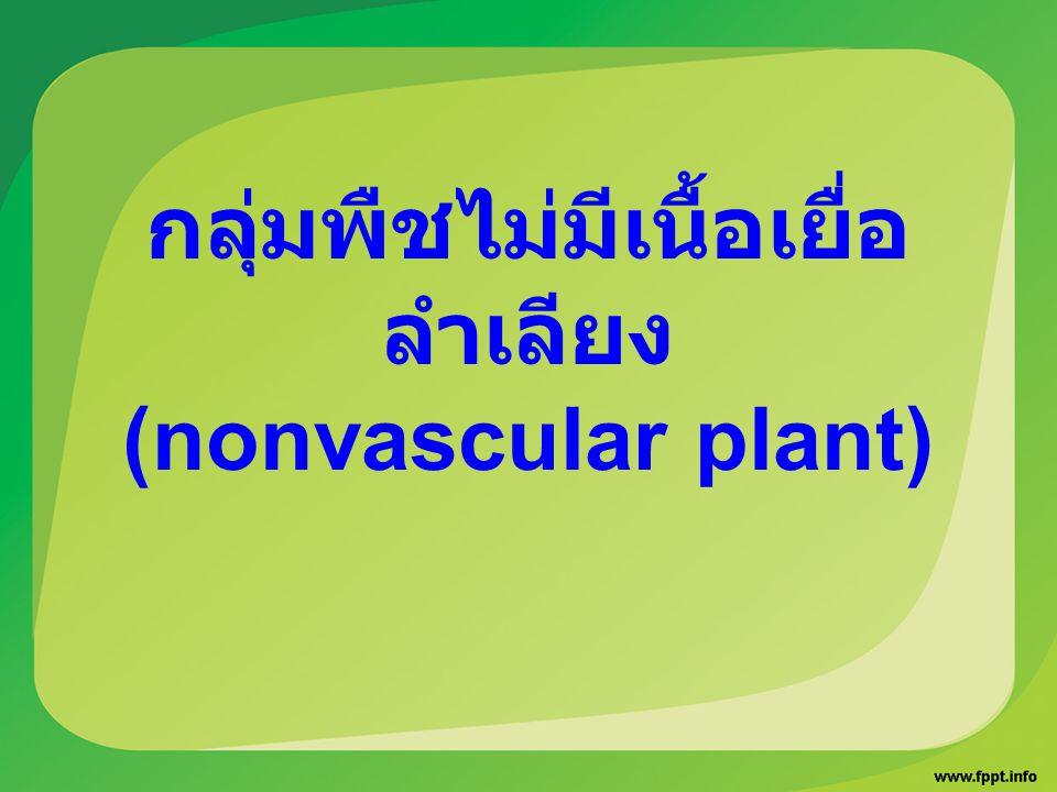 กลุ่มพืชไม่มีเนื้อเยื่อ ลำเลียง (nonvascular plant)