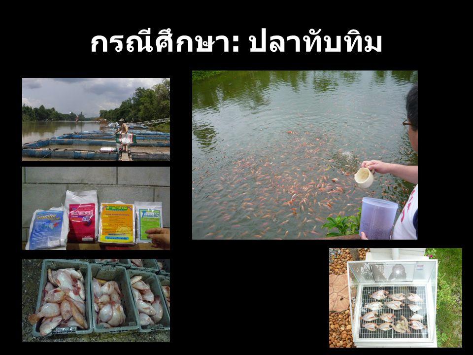 กรณีศึกษา : ปลาทับทิม