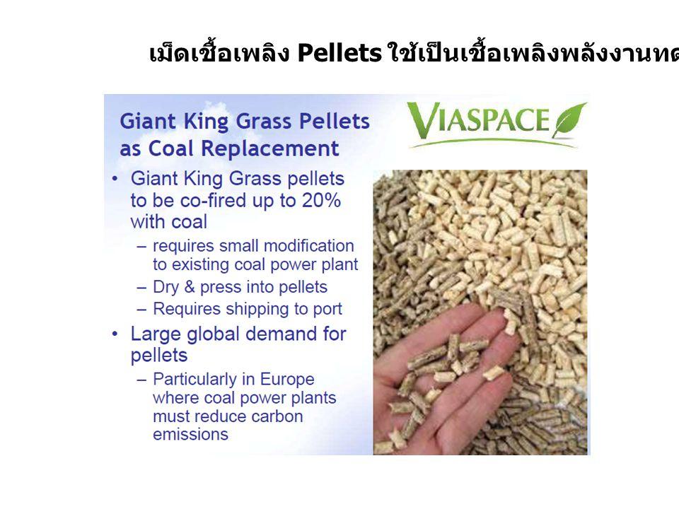 หญ้าพลังงานโตเร็ว ใช้ผลิตแก๊ส Compressed Biome thane Gas (CBG) ที่ใช้เป็นพลังงานทดแทนก๊าซธรรมชาติ NGV