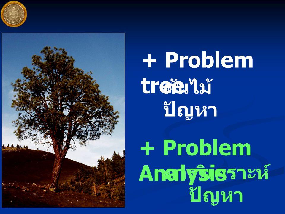 + Problem tree ต้นไม้ ปัญหา + Problem Analysis การวิเคราะห์ ปัญหา