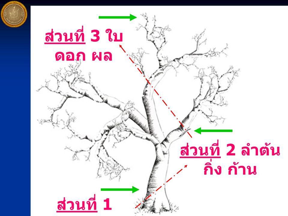 ส่วนที่ 3 ใบ ดอก ผล ส่วนที่ 2 ลำต้น กิ่ง ก้าน ส่วนที่ 1 ราก / โคน
