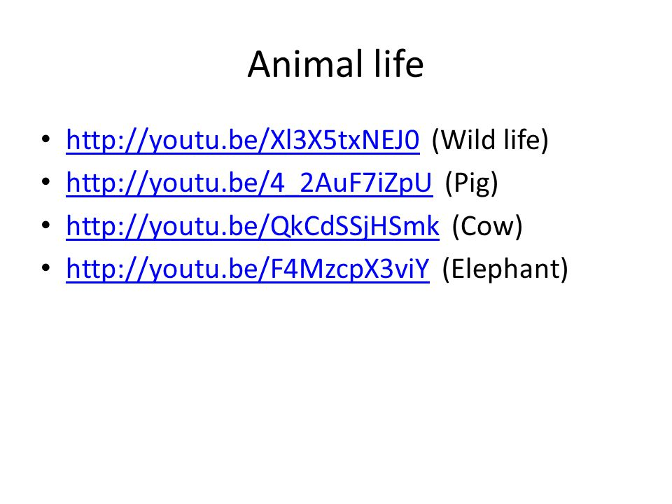 Animal life http://youtu.be/Xl3X5txNEJ0 (Wild life) http://youtu.be/Xl3X5txNEJ0 http://youtu.be/4_2AuF7iZpU (Pig) http://youtu.be/4_2AuF7iZpU http://y