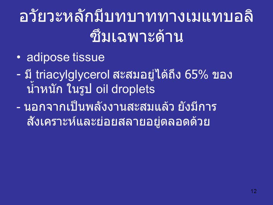 12 อวัยวะหลักมีบทบาททางเมแทบอลิ ซึมเฉพาะด้าน adipose tissue - มี triacylglycerol สะสมอยู่ได้ถึง 65% ของ น้ำหนัก ในรูป oil droplets - นอกจากเป็นพลังงาน