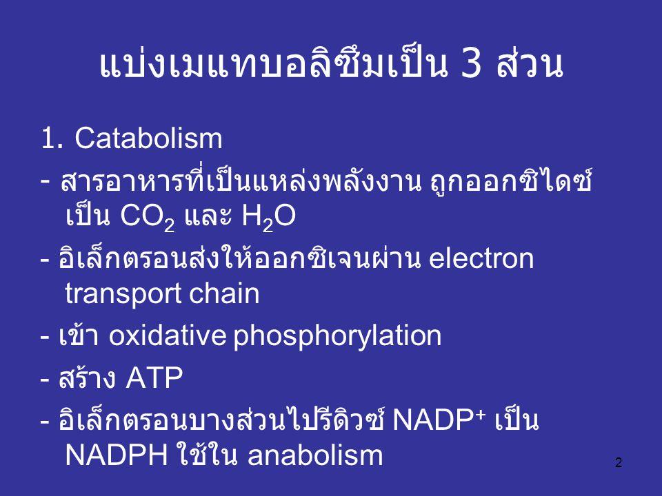 2 แบ่งเมแทบอลิซึมเป็น 3 ส่วน 1. Catabolism - สารอาหารที่เป็นแหล่งพลังงาน ถูกออกซิไดซ์ เป็น CO 2 และ H 2 O - อิเล็กตรอนส่งให้ออกซิเจนผ่าน electron tran