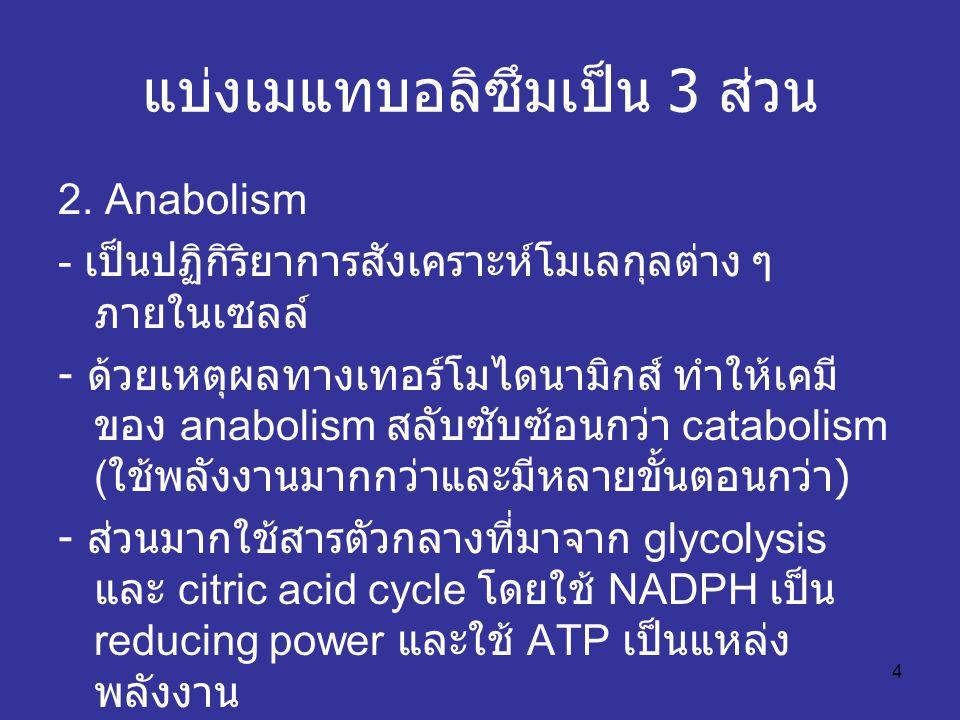 4 แบ่งเมแทบอลิซึมเป็น 3 ส่วน 2. Anabolism - เป็นปฏิกิริยาการสังเคราะห์โมเลกุลต่าง ๆ ภายในเซลล์ - ด้วยเหตุผลทางเทอร์โมไดนามิกส์ ทำให้เคมี ของ anabolism