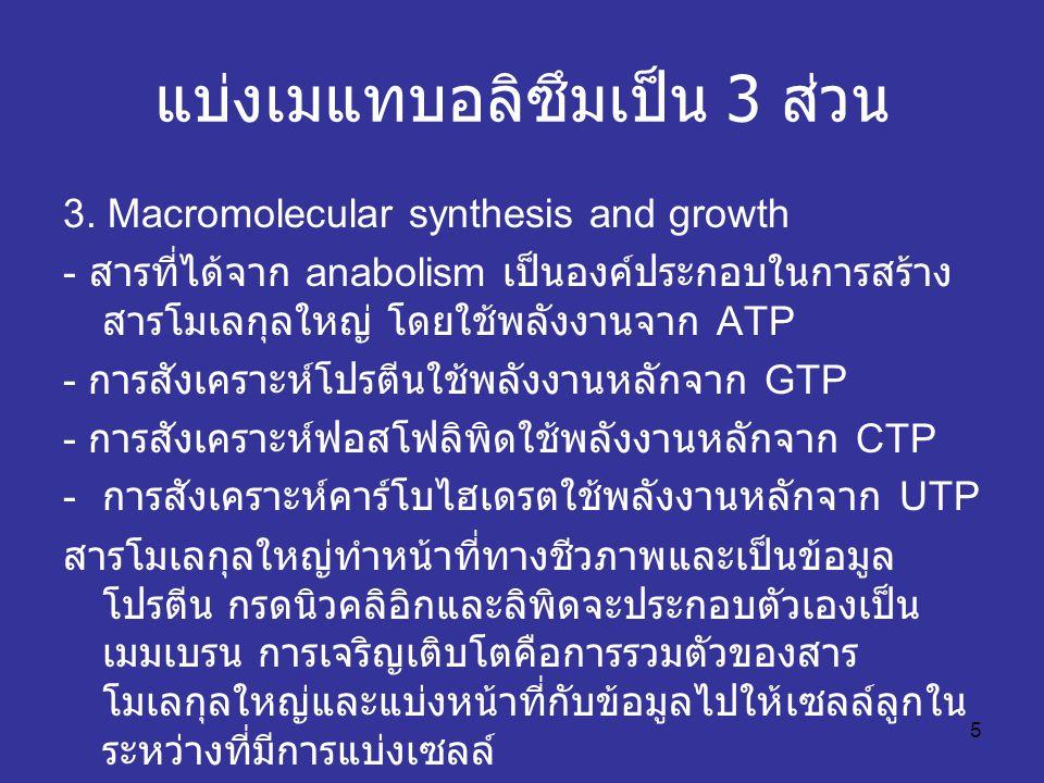 5 แบ่งเมแทบอลิซึมเป็น 3 ส่วน 3. Macromolecular synthesis and growth - สารที่ได้จาก anabolism เป็นองค์ประกอบในการสร้าง สารโมเลกุลใหญ่ โดยใช้พลังงานจาก