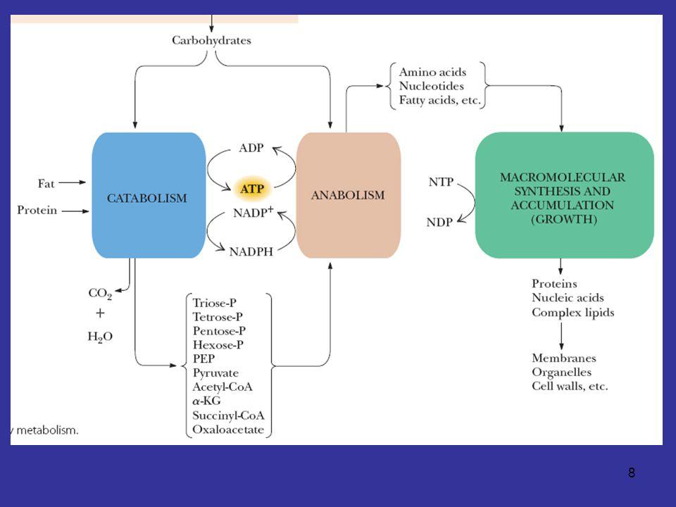 9 อวัยวะหลักมีบทบาททางเมแทบอลิ ซึมเฉพาะด้าน สมอง - มี respiratory metabolism สูง - ในผู้ใหญ่ที่กำลังพักผ่อน 20% ของออกซิเจนใช้ ในสมอง ( แม้จะมีมวลเพียง 2% ของมวล ร่างกาย ) - ไม่มีแหล่งพลังงานสำรอง ไม่มีไกลโคเจน โปรตีนที่ใช้ได้ หรือไขมัน - ใช้พลังงานจาก glucose ที่ส่งมาทางเลือด - ในสภาวะขาดอาหาร ใช้ ketone bodies