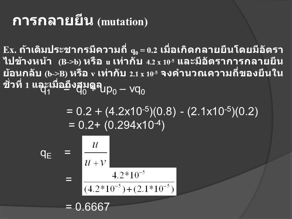 Ex. ถ้าเดิมประชากรมีความถี่ q 0 = 0.2 เมื่อเกิดกลายยีนโดยมีอัตรา ไปข้างหน้า (B->b) หรือ u เท่ากับ 4.2 x 10 -5 และมีอัตราการกลายยีน ย้อนกลับ (b->B) หรื