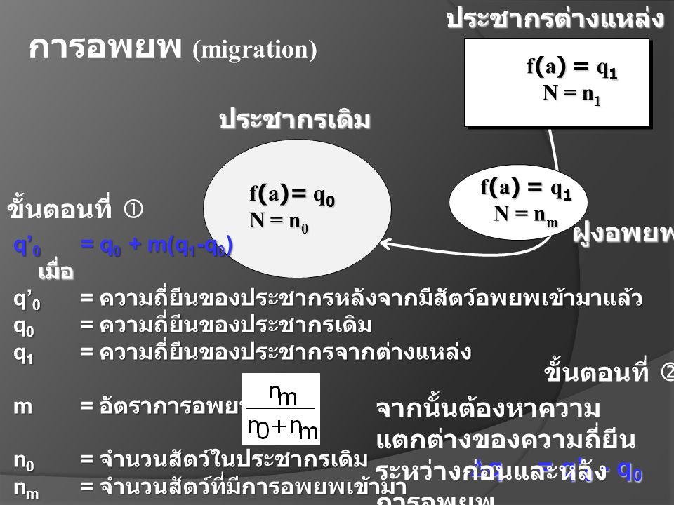 f(a) = q 1 N= n 1 f(a)= q 0 N= n 0 ประชากรต่างแหล่งประชากรเดิม f(a) = q 1 N = n m ฝูงอพยพ การอพยพ (migration) q' 0 = q 0 + m(q 1 -q 0 ) เมื่อ เมื่อ q'