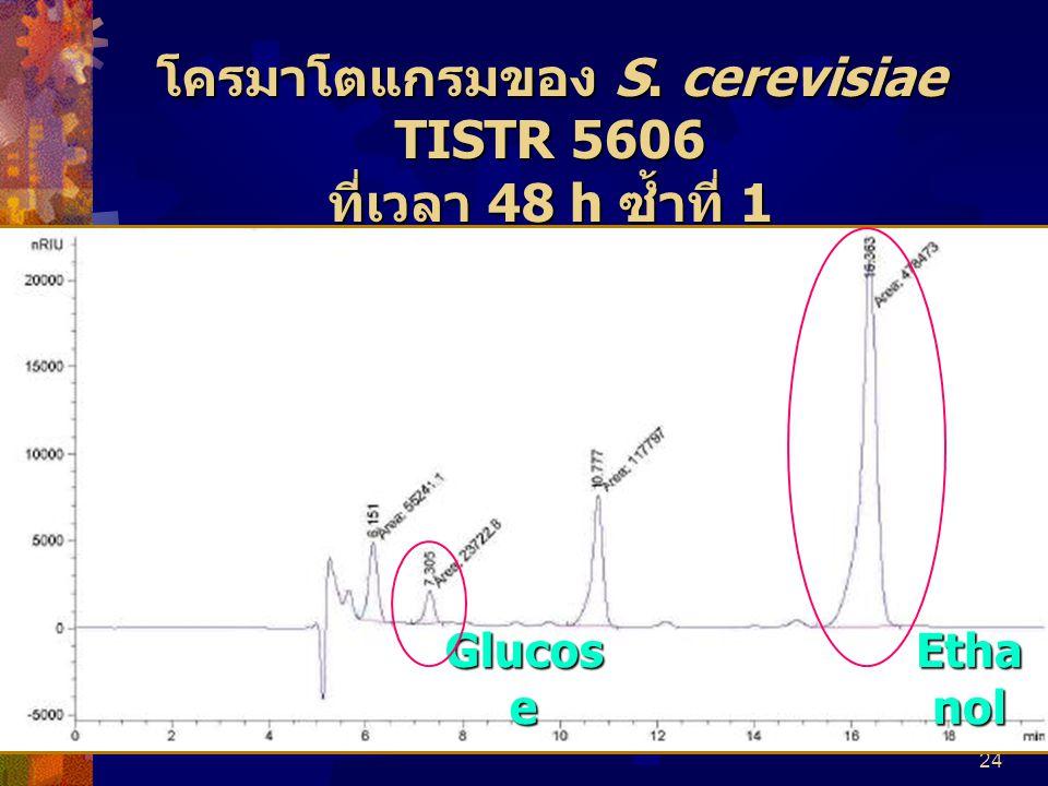 24 โครมาโตแกรมของ S. cerevisiae TISTR 5606 ที่เวลา 48 h ซ้ำที่ 1 Glucos e Etha nol