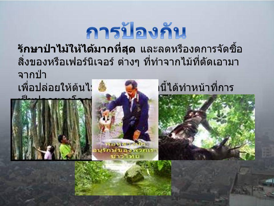 รักษาป่าไม้ให้ได้มากที่สุด และลดหรืองดการจัดซื้อ สิ่งของหรือเฟอร์นิเจอร์ ต่างๆ ที่ทำจากไม้ที่ตัดเอามา จากป่า เพื่อปล่อยให้ต้นไม้และป่าไม้เหล่านี้ได้ทำ