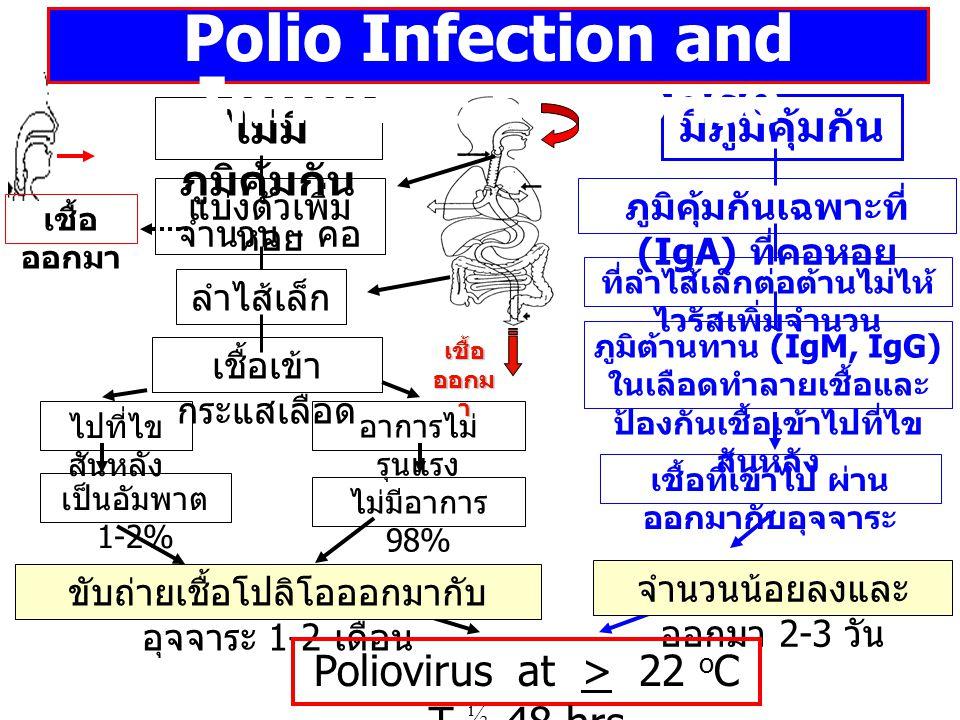 ตราบใดยังมีผู้ป่วยโปลิโอ แม้เพียงประเทศใดประเทศหนึ่ง ทุกประเทศบนโลกใบนี้ย่อมเสี่ยงที่จะเกิด...โปลิโอได้เสมอ สำนักงานประสานการกวาดล้างโรคโปลิโอขอบคุณ