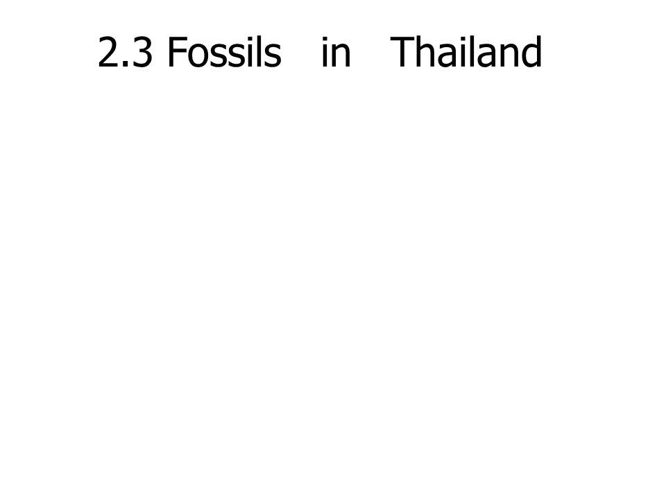 2.3 Fossils in Thailand