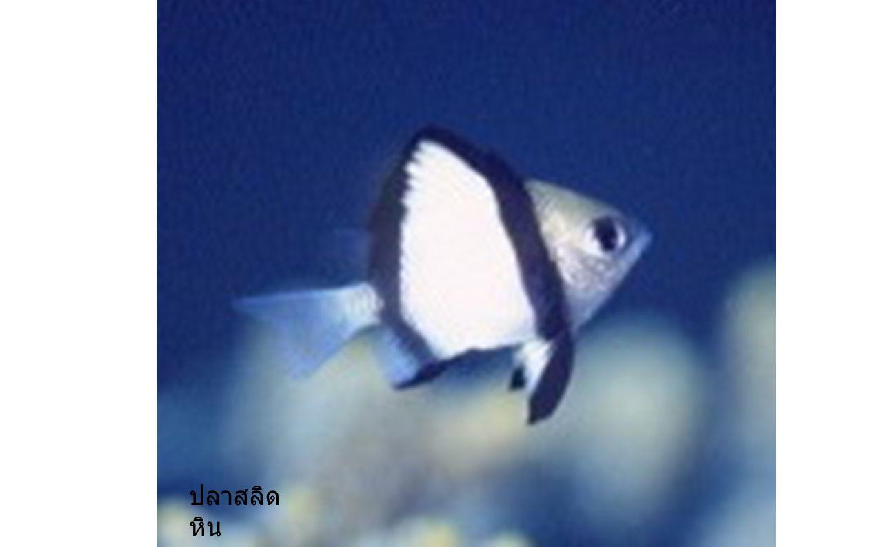 ปลา เป็นสัตว์เลือดเย็น หายใจด้วยเหงือก มีแผ่น ปิดเหงือก มีครีบ บางชนิดมีเกล็ด บางชนิดไม่มีเกล็ด