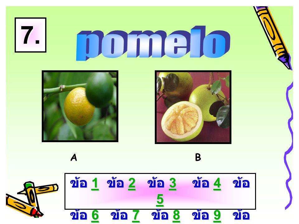 A B 6. ข้อ 1 ข้อ 2 ข้อ 3 ข้อ 4 ข้อ 5 ข้อ 6 ข้อ 7 ข้อ 8 ข้อ 9 ข้อ 10 1234 56789 101234 56789 10