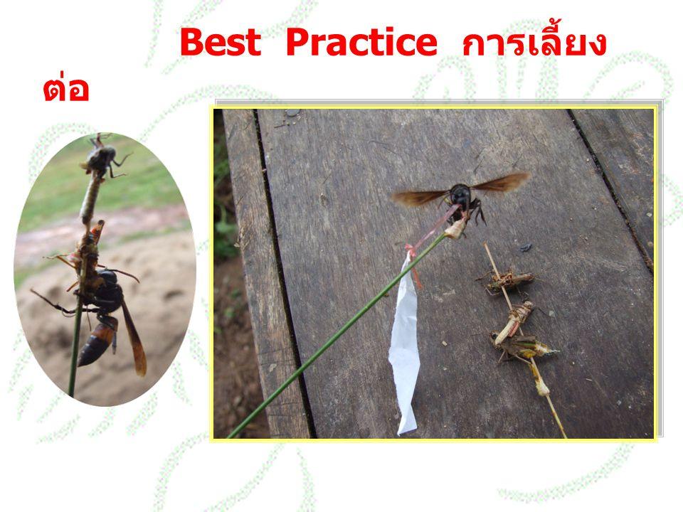 Best Practice การเลี้ยง ต่อ