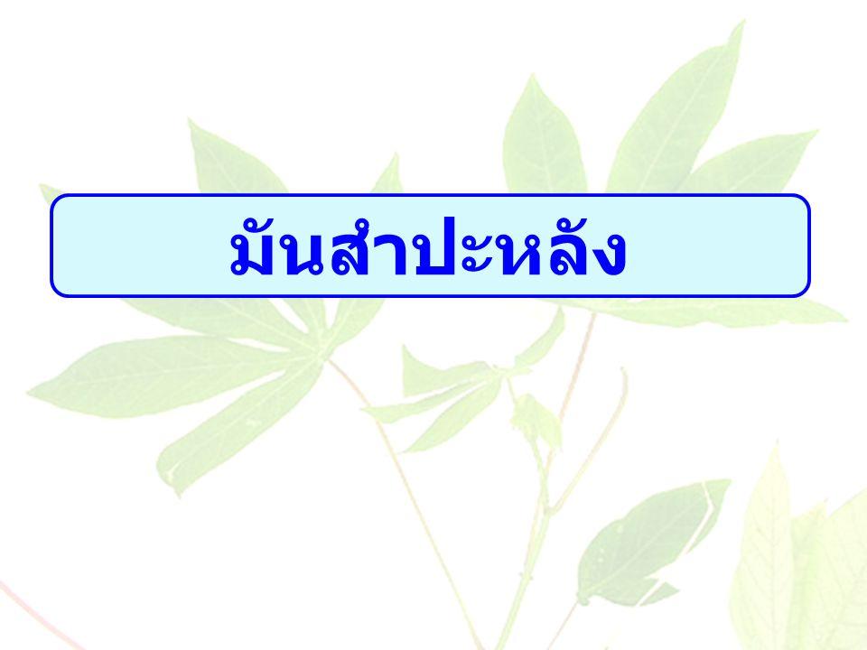 ล้านตัน / ล้านไร่ ที่มา : สำนักงานเศรษฐกิจการเกษตร เนื้อที่เก็บเกี่ยวและผลผลิตของไทยปี 2554-2558 ผลผลิต Gr.= 7.19 % เนื้อที่ เก็บ เกี่ยว Gr.=3.