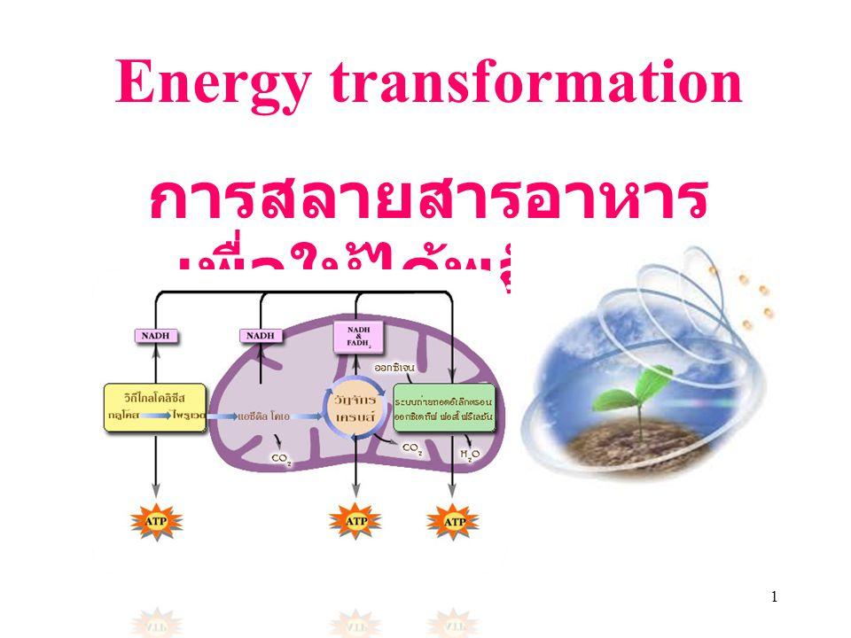 2 การเปลี่ยนรูปพลังงานและการหมุนเวียน สารเคมีในระบบนิเวศ  Chloroplast และ mitochondria เป็น organelles ที่เปลี่ยน พลังงานรูปหนึ่งไปอีกรูป หนึ่ง  ใน Chloroplast เกิด กระบวนการ photosynthesis ซึ่งพลังงานแสงถูก เปลี่ยนเป็นพลังงานสะสมใน คาร์โบไฮเดรต  ที่ mitochondria เกิด กระบวนการ cellular respiration พลังงานที่เก็บ ไว้ในคาร์โบไฮเดรตจะถูก เปลี่ยนเป็นพลังงานในรูป ATP ซึ่งสิ่งมีชีวิตจะนำไปใช้ ในเซลล์ต่อไป  มีพลังงานบางส่วนสูญเสีย ไปกับความร้อน