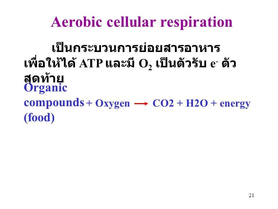21 Aerobic cellular respiration เป็นกระบวนการย่อยสารอาหาร เพื่อให้ได้ ATP และมี O 2 เป็นตัวรับ e - ตัว สุดท้าย Organic compounds (food) + Oxygen CO2 +