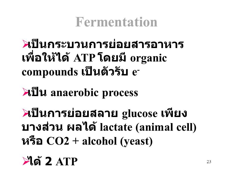 23 Fermentation  เป็นกระบวนการย่อยสารอาหาร เพื่อให้ได้ ATP โดยมี organic compounds เป็นตัวรับ e -  เป็น anaerobic process  เป็นการย่อยสลาย glucose