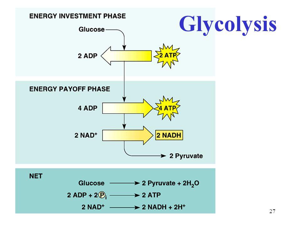 27 Glycolysis