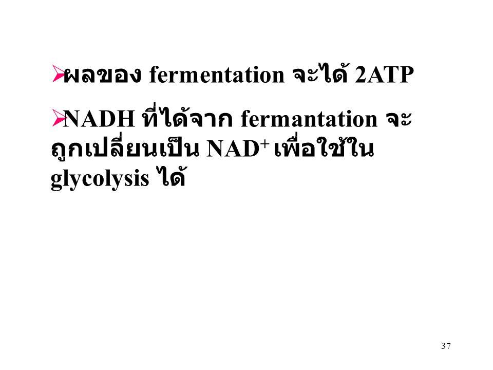 37  ผลของ fermentation จะได้ 2ATP  NADH ที่ได้จาก fermantation จะ ถูกเปลี่ยนเป็น NAD + เพื่อใช้ใน glycolysis ได้