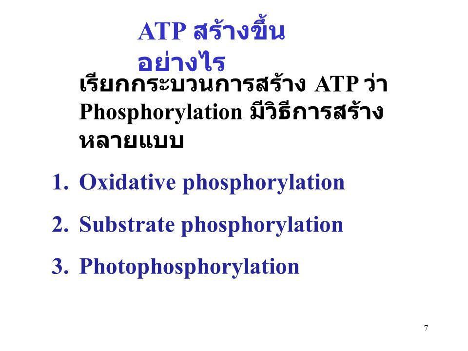 7 ATP สร้างขึ้น อย่างไร เรียกกระบวนการสร้าง ATP ว่า Phosphorylation มีวิธีการสร้าง หลายแบบ 1.Oxidative phosphorylation 2.Substrate phosphorylation 3.P