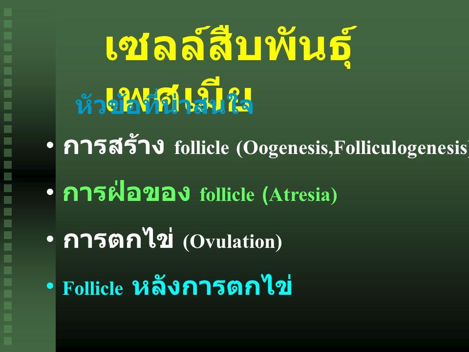 เซลล์สืบพันธุ์ เพศเมีย การสร้าง follicle (Oogenesis,Folliculogenesis) การฝ่อของ follicle (Atresia) การตกไข่ (Ovulation) Follicle หลังการตกไข่ หัวข้อที่น่าสนใจ