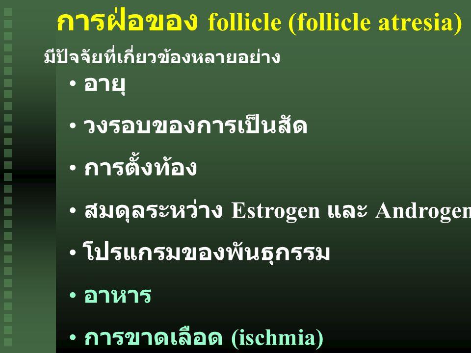 การฝ่อของ follicle (follicle atresia) มีปัจจัยที่เกี่ยวข้องหลายอย่าง อายุ วงรอบของการเป็นสัด การตั้งท้อง สมดุลระหว่าง Estrogen และ Androgen โปรแกรมของพันธุกรรม อาหาร การขาดเลือด (ischmia)