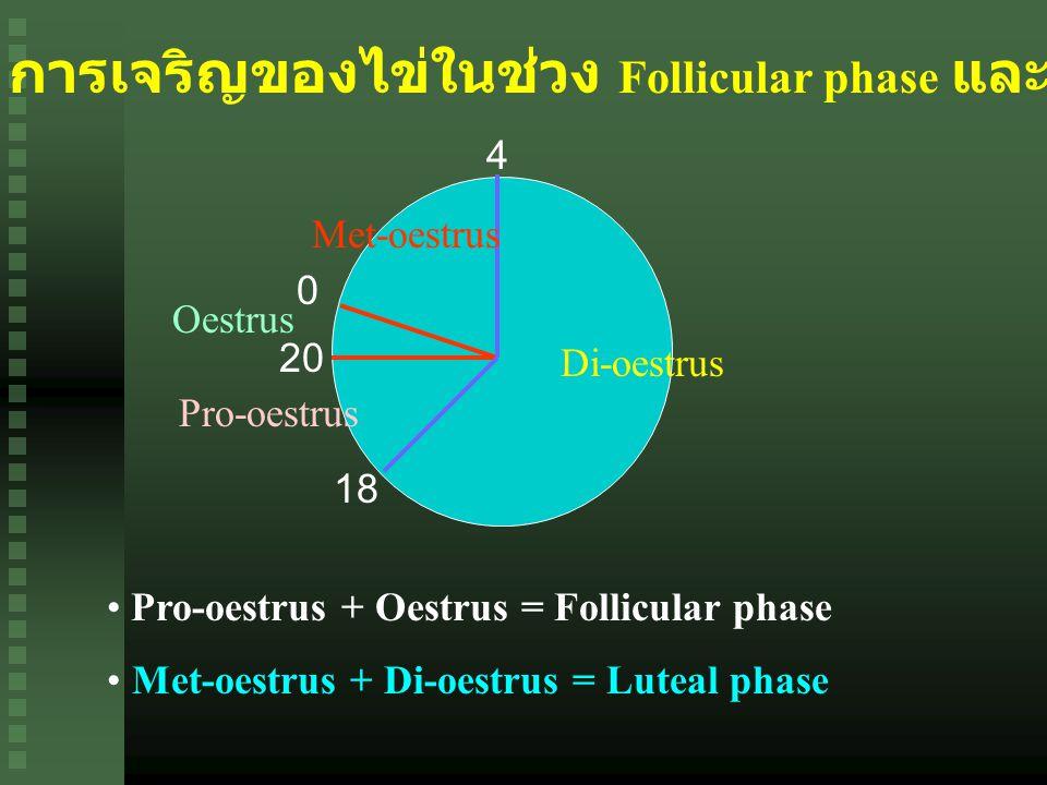 การเจริญของไข่ในช่วง Follicular phase และ Luteal phase 0 20 18 4 Di-oestrus Met-oestrus Oestrus Pro-oestrus Pro-oestrus + Oestrus = Follicular phase Met-oestrus + Di-oestrus = Luteal phase