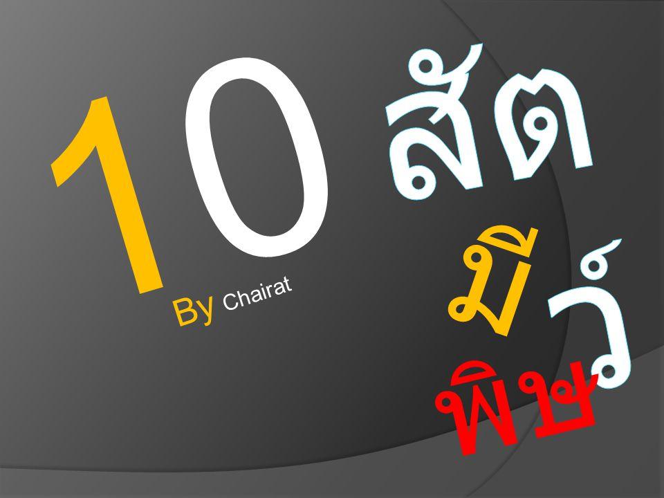 1010 พิษ มี By Chairat