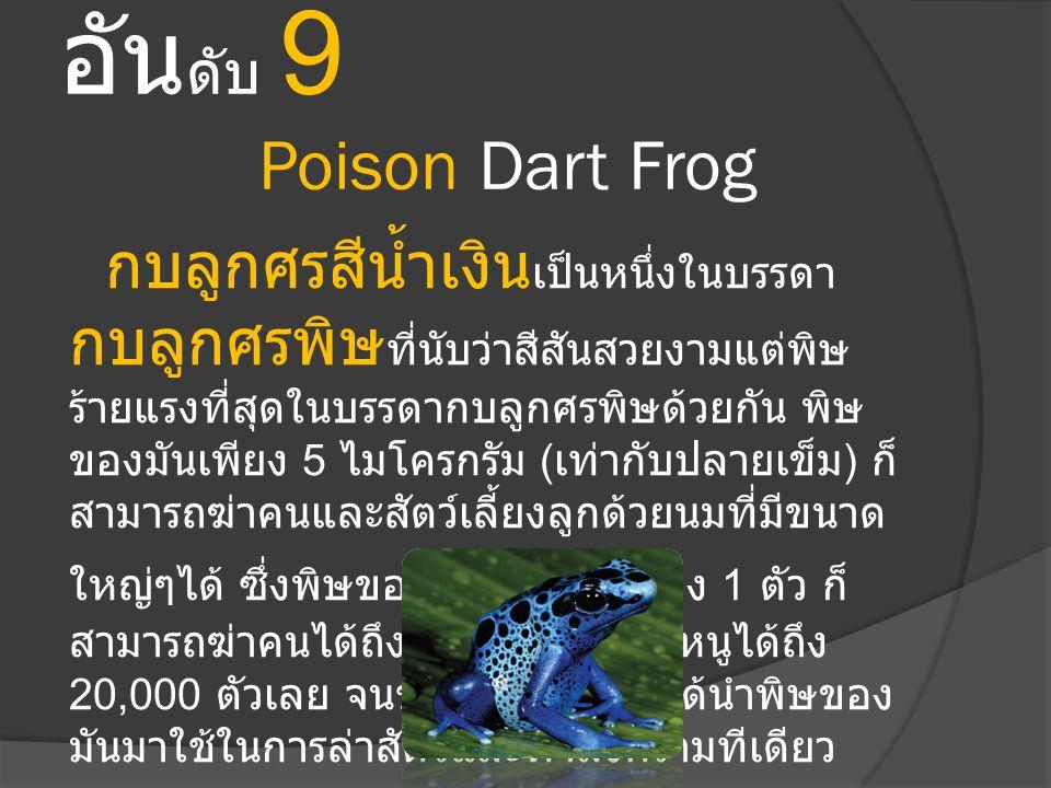 อัน ดับ 9 Poison Dart Frog กบลูกศรสีน้ำเงิน เป็นหนึ่งในบรรดา กบลูกศรพิษ ที่นับว่าสีสันสวยงามแต่พิษ ร้ายแรงที่สุดในบรรดากบลูกศรพิษด้วยกัน พิษ ของมันเพี