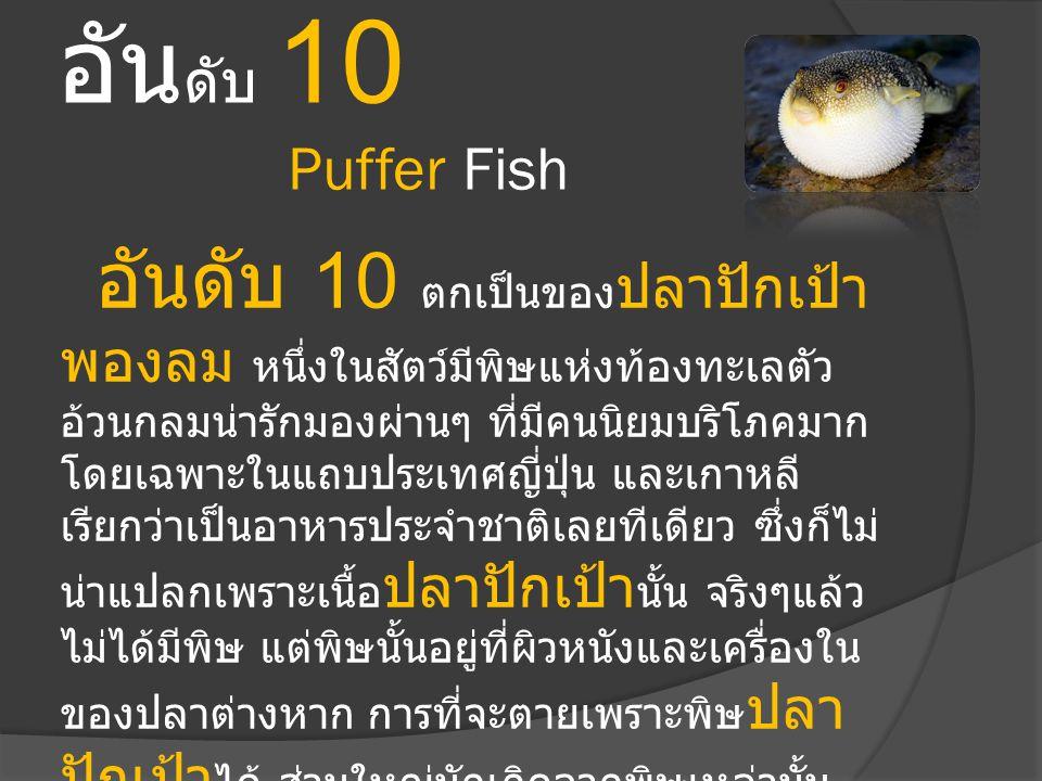 อัน ดับ 10 Puffer Fish อันดับ 10 ตกเป็นของ ปลาปักเป้า พองลม หนึ่งในสัตว์มีพิษแห่งท้องทะเลตัว อ้วนกลมน่ารักมองผ่านๆ ที่มีคนนิยมบริโภคมาก โดยเฉพาะในแถบป