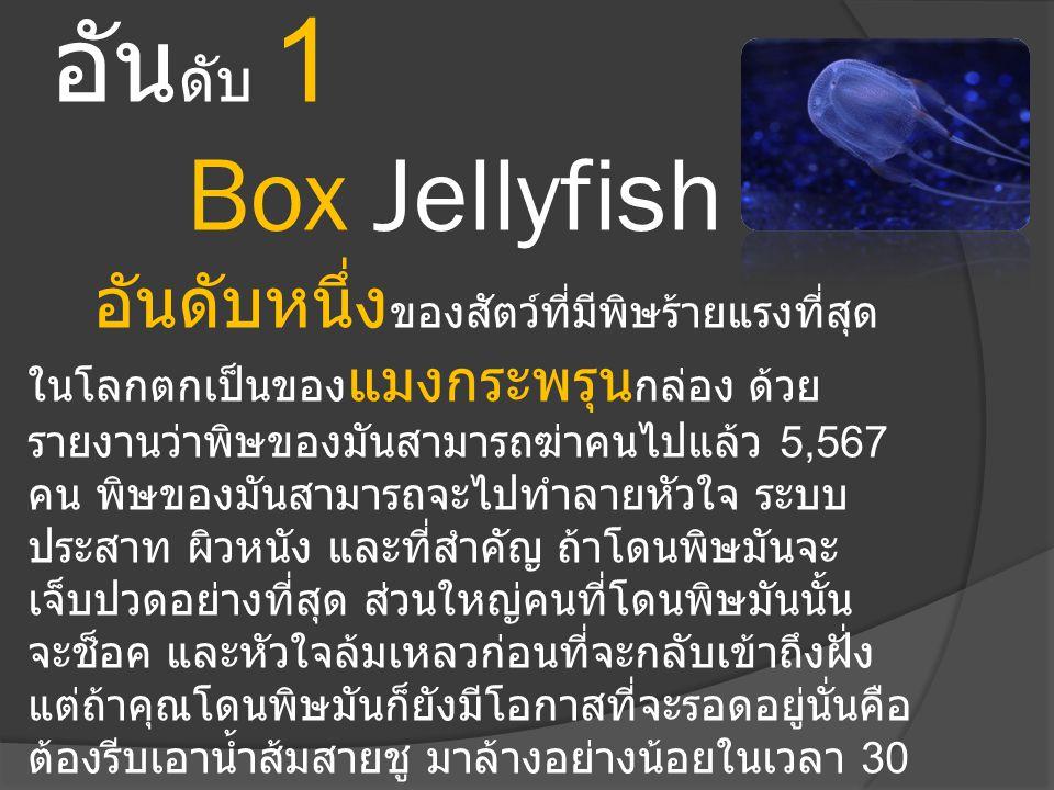 อัน ดับ 1 Box Jellyfish อันดับหนึ่ง ของสัตว์ที่มีพิษร้ายแรงที่สุด ในโลกตกเป็นของ แมงกระพรุน กล่อง ด้วย รายงานว่าพิษของมันสามารถฆ่าคนไปแล้ว 5,567 คน พิ