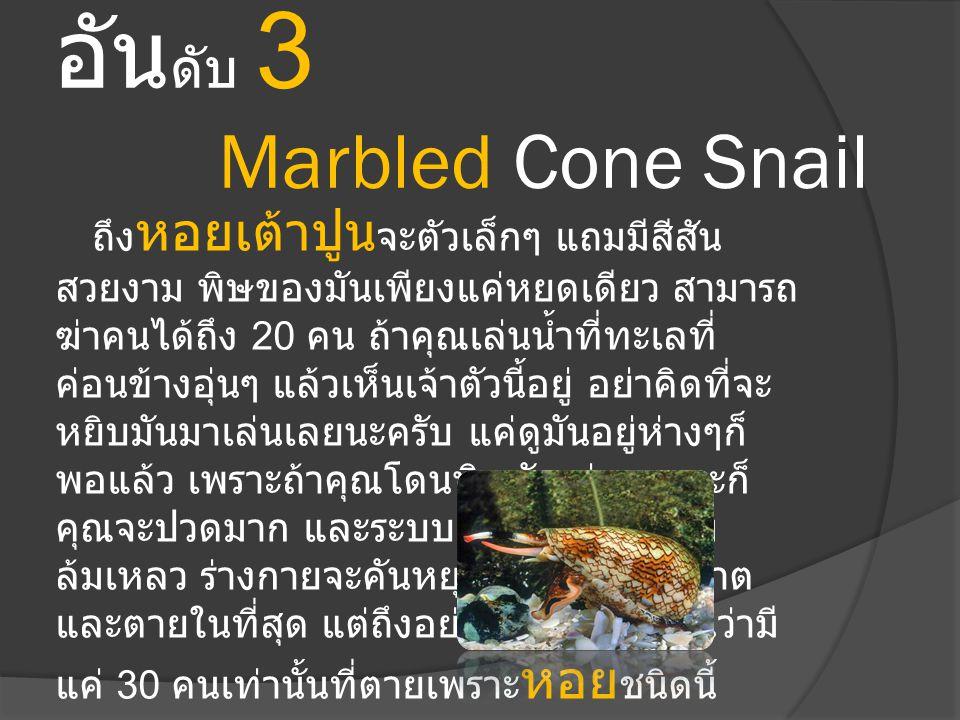 อัน ดับ 3 Marbled Cone Snail ถึง หอยเต้าปูน จะตัวเล็กๆ แถมมีสีสัน สวยงาม พิษของมันเพียงแค่หยดเดียว สามารถ ฆ่าคนได้ถึง 20 คน ถ้าคุณเล่นน้ำที่ทะเลที่ ค่