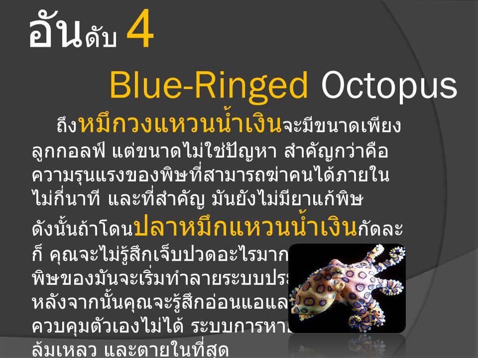 อัน ดับ 4 Blue-Ringed Octopus ถึง หมึกวงแหวนน้ำเงิน จะมีขนาดเพียง ลูกกอลฟ์ แต่ขนาดไม่ใช่ปัญหา สำคัญกว่าคือ ความรุนแรงของพิษที่สามารถฆ่าคนได้ภายใน ไม่ก