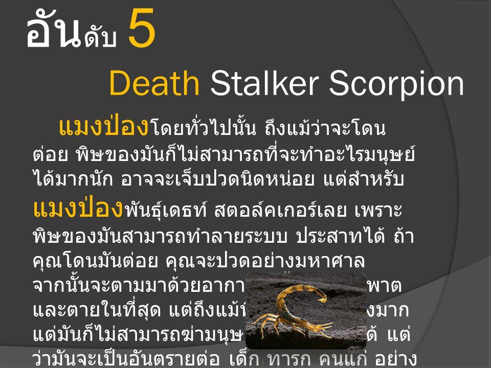 อัน ดับ 5 Death Stalker Scorpion แมงป่อง โดยทั่วไปนั้น ถึงแม้ว่าจะโดน ต่อย พิษของมันก็ไม่สามารถที่จะทำอะไรมนุษย์ ได้มากนัก อาจจะเจ็บปวดนิดหน่อย แต่สำห