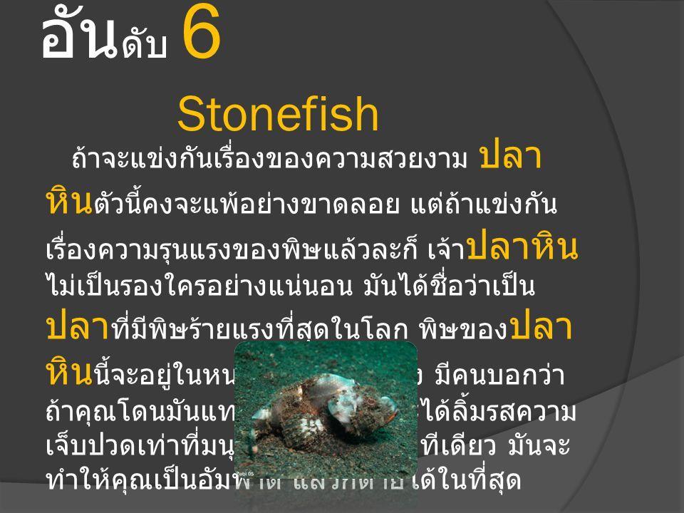 อัน ดับ 6 Stonefish ถ้าจะแข่งกันเรื่องของความสวยงาม ปลา หิน ตัวนี้คงจะแพ้อย่างขาดลอย แต่ถ้าแข่งกัน เรื่องความรุนแรงของพิษแล้วละก็ เจ้า ปลาหิน ไม่เป็นร