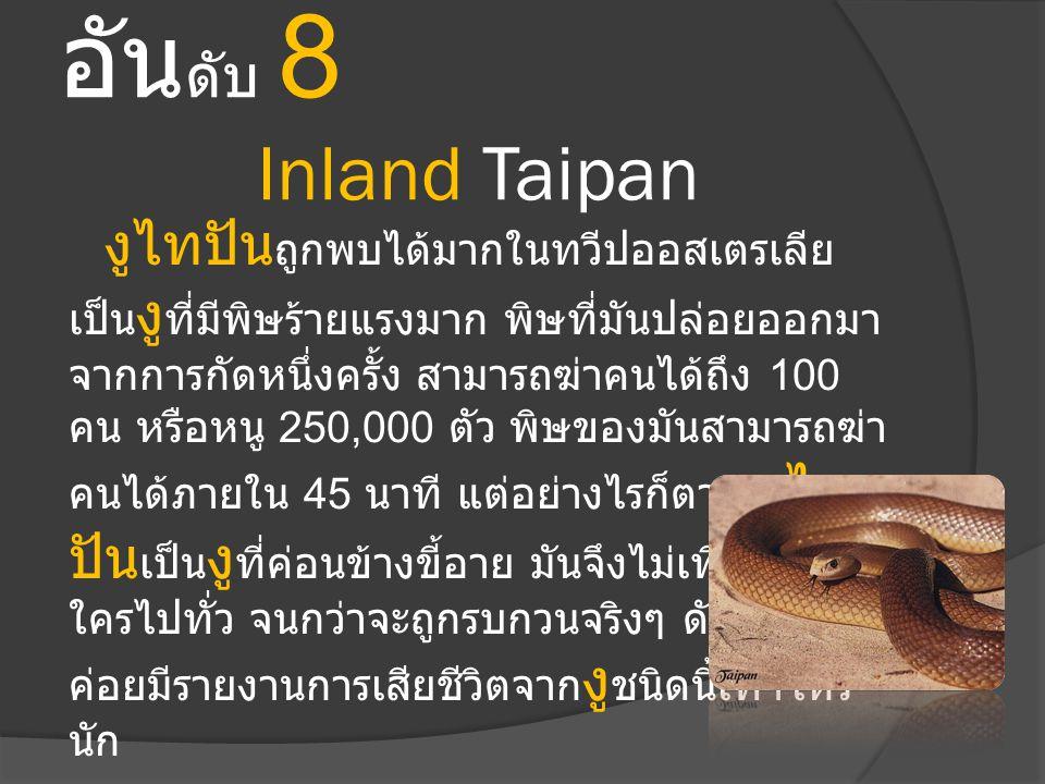 อัน ดับ 8 Inland Taipan งูไทปัน ถูกพบได้มากในทวีปออสเตรเลีย เป็น งู ที่มีพิษร้ายแรงมาก พิษที่มันปล่อยออกมา จากการกัดหนึ่งครั้ง สามารถฆ่าคนได้ถึง 100 ค