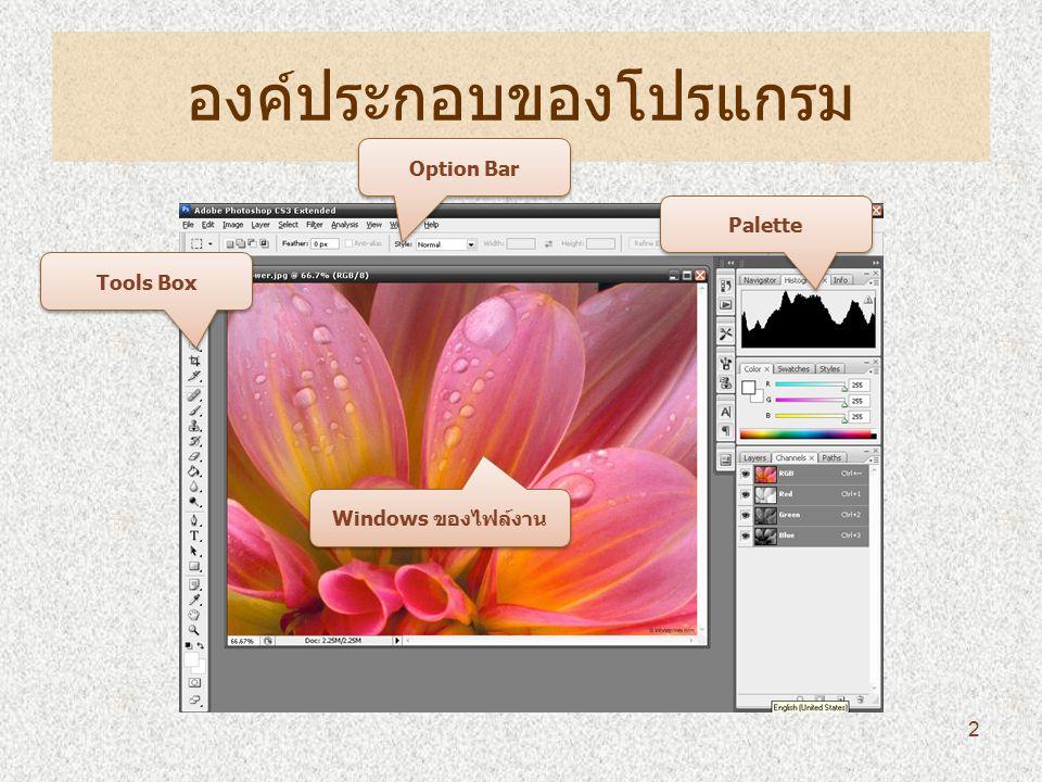 องค์ประกอบของโปรแกรม Tools Box Option Bar Palette Windows ของไฟล์งาน 2