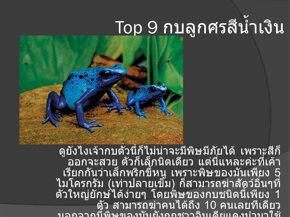 Top 8 งูไทปัน เป็นงูที่เราไม่ค่อยได้ยินชื่อมันเท่าไหร่นัก ก็ เพราะมันค่อนข้างขี้อายเลยไม่ได้ออกมาไล่กัด ใครเค้าไปทั่ว แต่พิษที่มันปล่อยออกมาเพียง ครั้งเดียวก็สามารถฆ่าคนได้ถึง 100 คน ภายในเวลา 45 นาที พบได้แถบทวีป ออสเตรเลีย